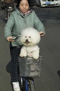 Hund i cyjkelkurv