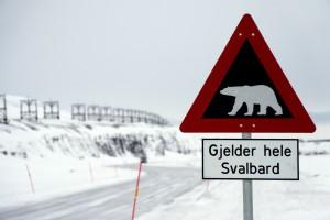 Advarsel mod isbjørne uden for Longyearbyen Svalbard