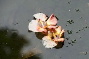 Blomster Singapore Regnskov
