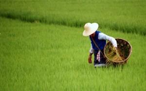 Dali 1995 Kvinde i rismark