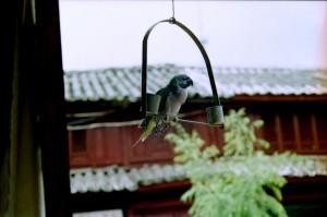 Dali 1995 - fugl ved tage