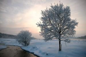 Frosset træ ved Lindenborg å, Gravlev Dalen