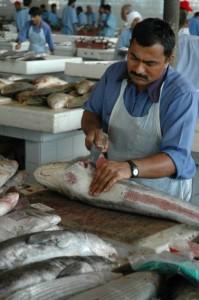 Haj skæres ud - Dubai Fiskemarked
