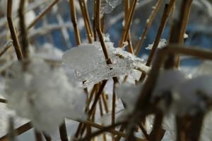 Is mellem siv