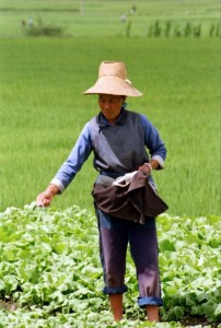 Kina 1995 Kvinde i mark Dali