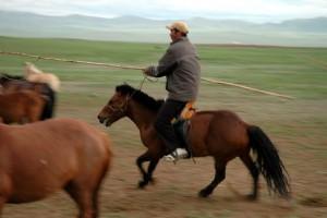 Rytter Mongoliet
