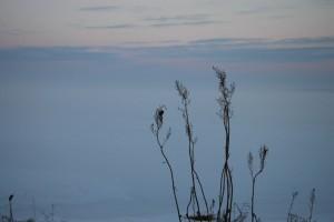 Svaner i is ved Sebbersund