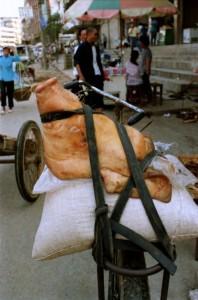 Yangshuo 1995 - Grisehoved på bagagebærer