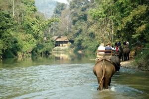 Elefantsafari i Thailand