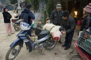 Hovedløs gris på scooter, Ban Gioc vandfald