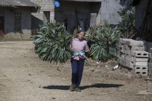 Tay-kvinde ved Ban Gioc vandfald