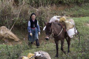 Tay-kvinder henter sand nær Ban Gioc-vandfaldet tæt på Kina