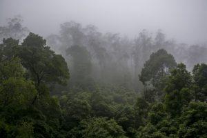 Tågeskov