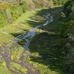 Drone over kilderne i Rold Skov